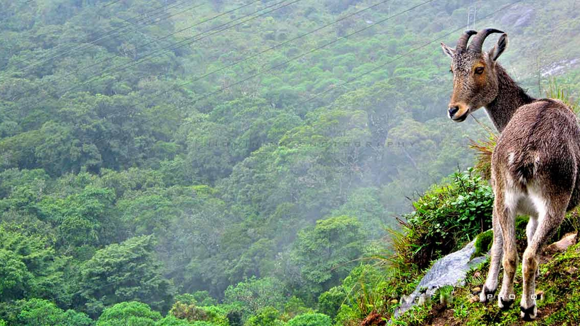 eravikulam national park entry fee and timings
