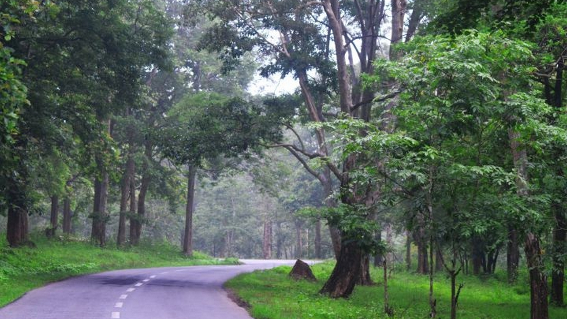 Muthanga Wildlife Sanctuary Wayanad