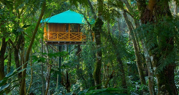 dreamcatcher-treehouse-munnar01-1529135646.jpg