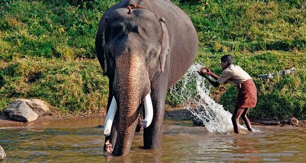 elephant-kerala-1521803211.jpg