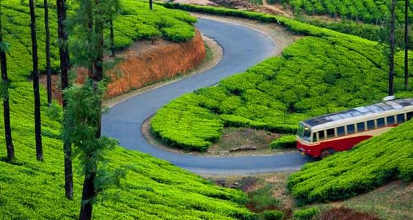 munnar-tea-garden-bus-1518332814.jpg