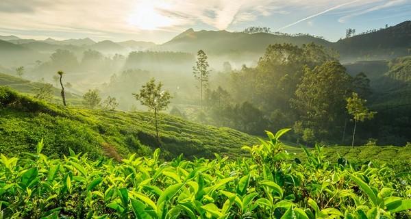 sunrise-over-tea-plantations-munnar-1523184670.jpg