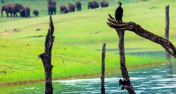 thekkady-elephant-herd-1520062884.jpg