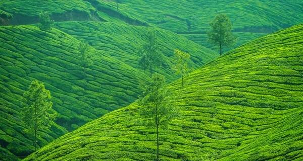 wayanad-kerala-holiday-1530635128.jpg