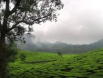 Munnar Sightseeing and Travel Experience