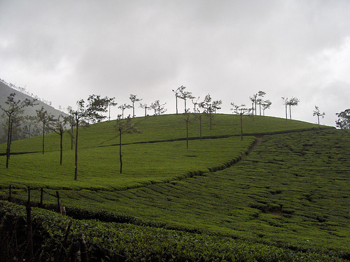 Climate in Munnar