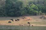 Thekkady Wildlife Sanctuary