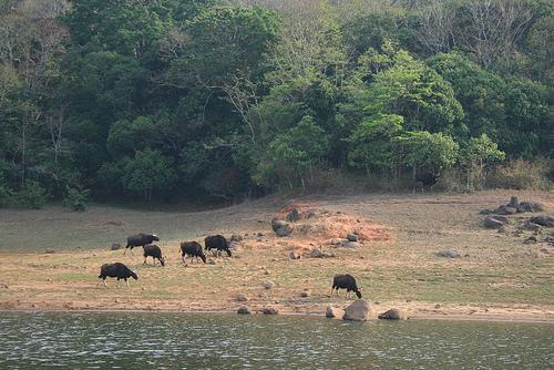Thekkady Wildlife Sanctuary