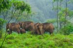 Gavi in Kerala – Trekkers Paradise