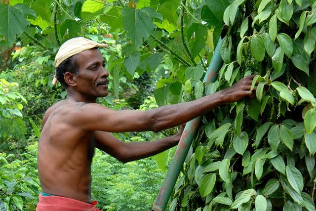 Spice Plantation Tour Thekkady