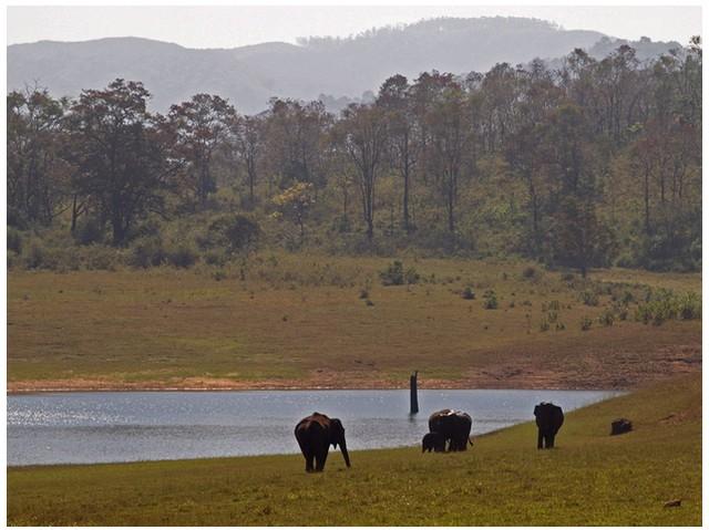 Elephants near Boating