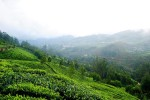 Photos of Munnar Day Out