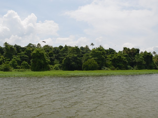 Kumarakom Bird Sanctuary - View from Backwaters