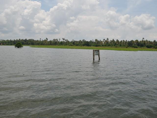 A Tree and a signboard in Kumarakom Backwaters