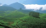 Stay in Munnar Plantation HomeStay