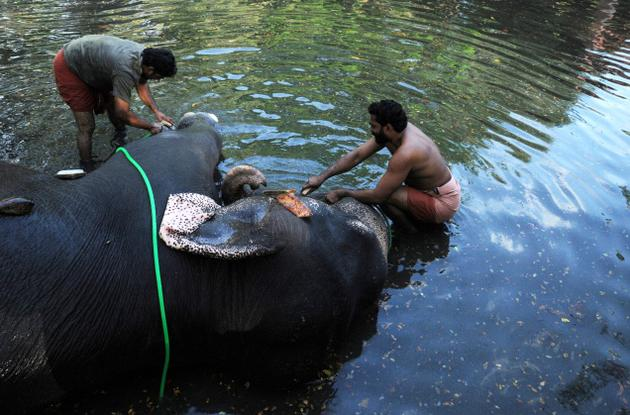 kerala-elephant-bathing