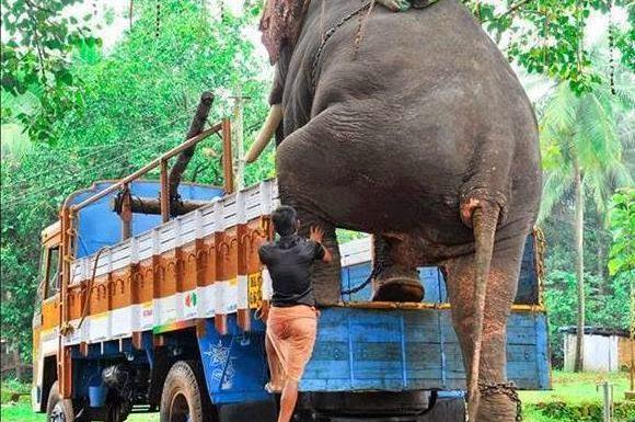 Kerala Elephant Photos