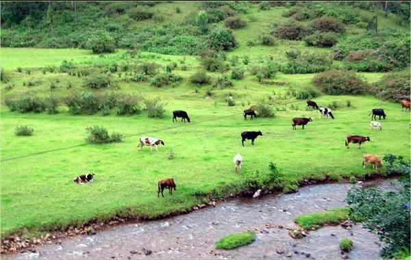 indo-swiss-dairy-farm
