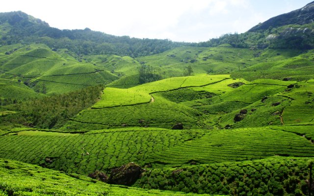 Top 15 Best Places to Visit in Munnar - Kerala Tourism ...
