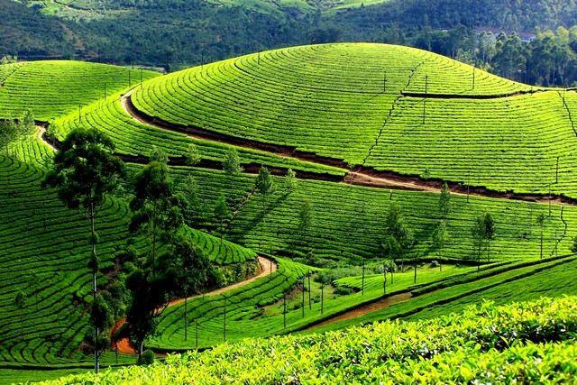 Munnar was once the summer season of the erstwhile English Govt