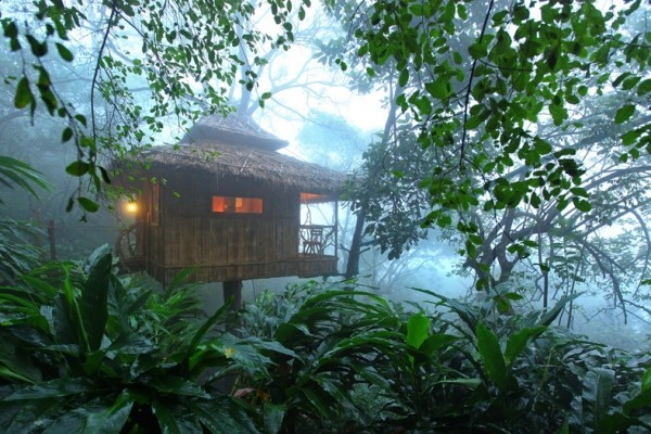 Treehouse in Kerala is creating the true experience to immerse in nature.