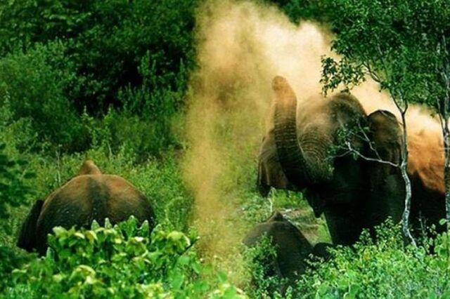 ulipooni-wildlife-sanctuary
