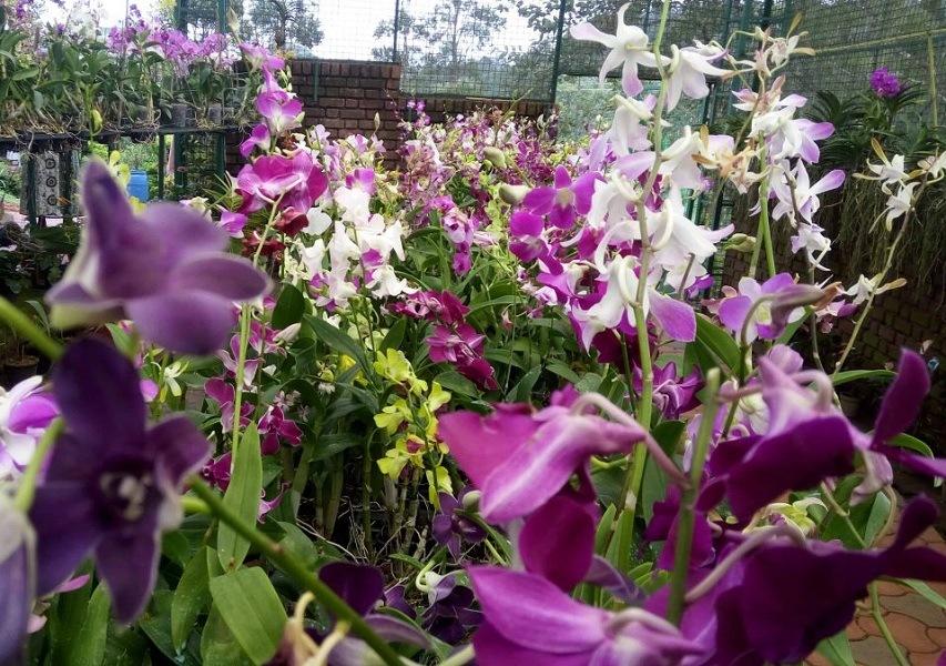Vagamon orchid Garden