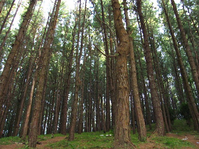 Vagamon Pine Forests