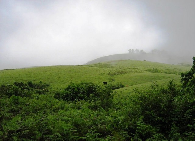 vagamon-green-meadows