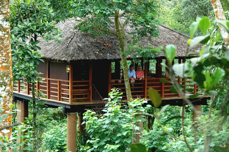 kerala treehouse stay for a couple
