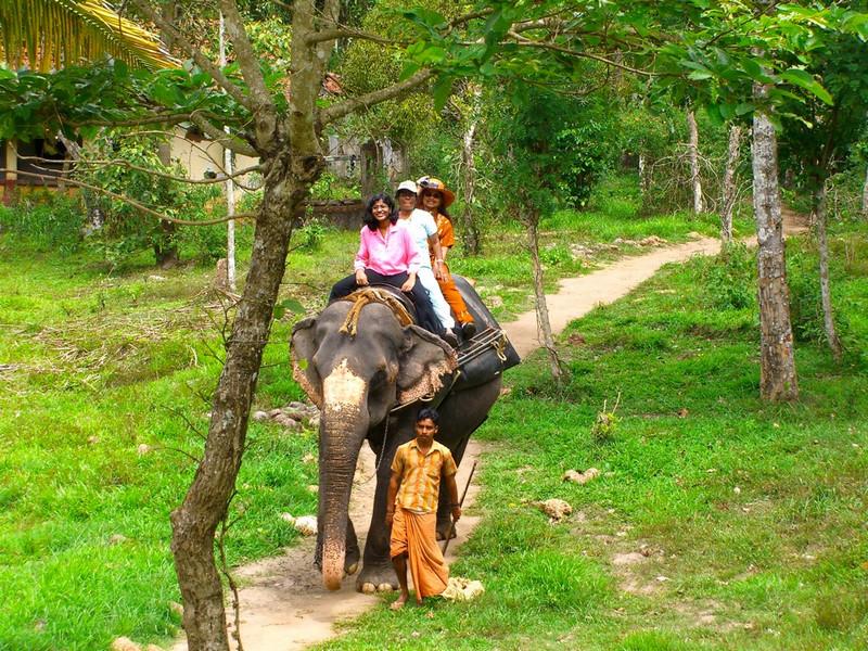 Kerala Elephant Ride