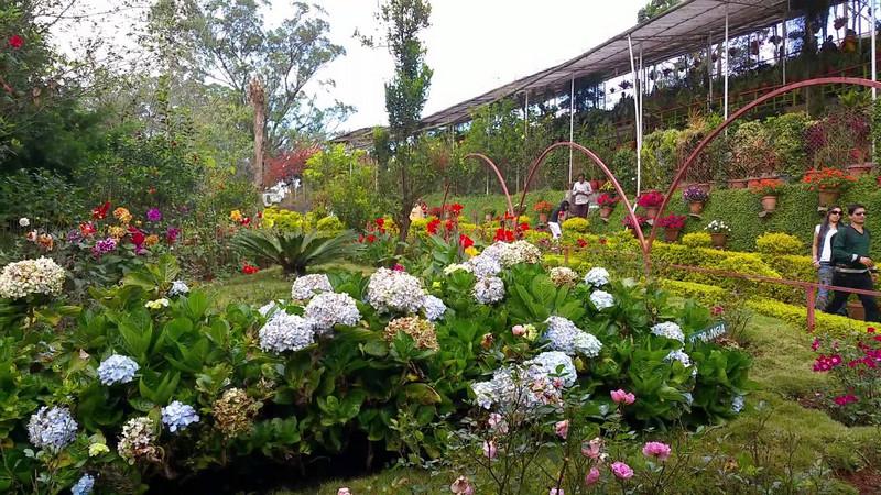 flower-garden-munnar