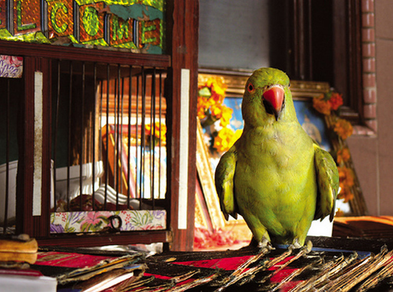 you can find fortune tellers with parrots in most tourist places in kerala