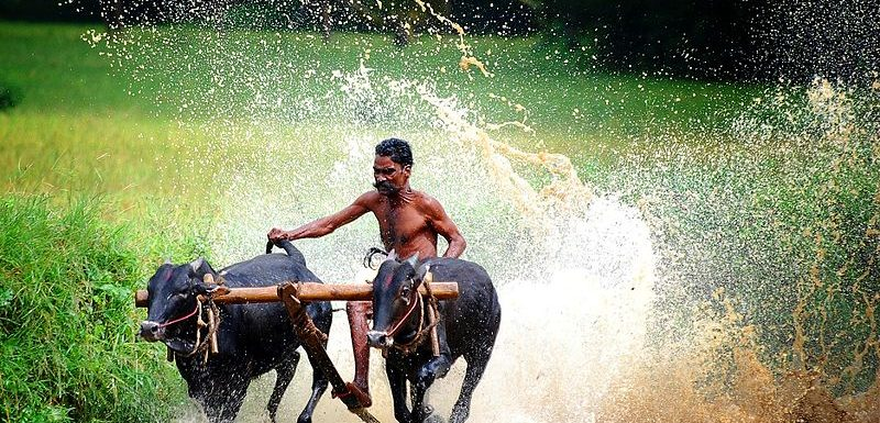 75 best things to do in Kerala in 2020 (with Photos)