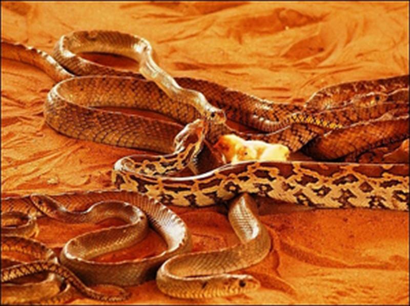snake-park-parassinikkadavu