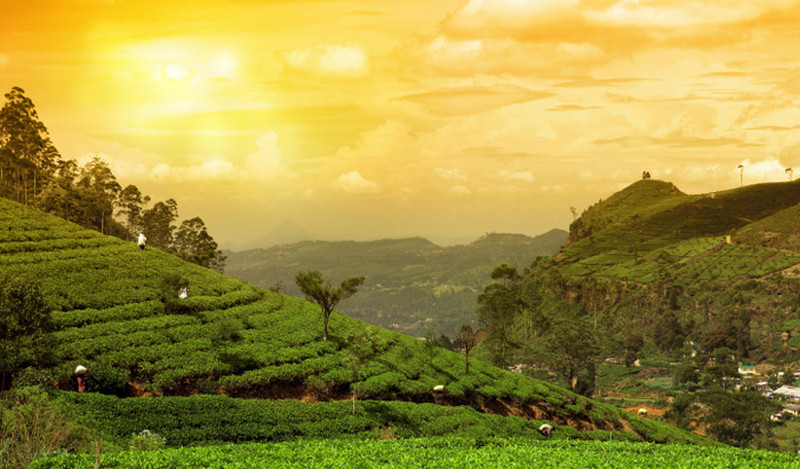 Complete list of 70 best things to do in Kerala with Photos