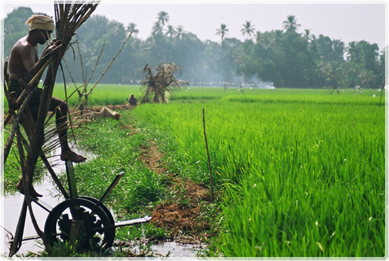 water-wheel-farmer-kerala
