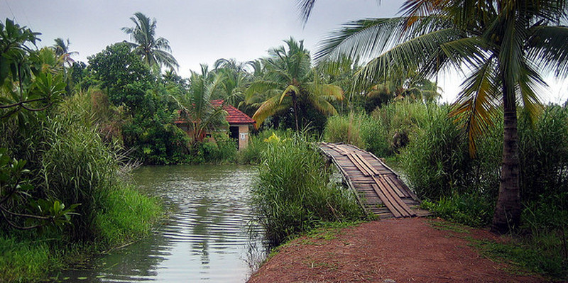 coconut-wooden-bridge-kerala