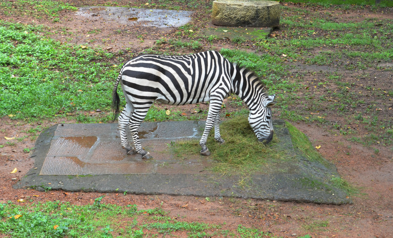 Trivandrum Zoo is the oldest Zoo in Asia