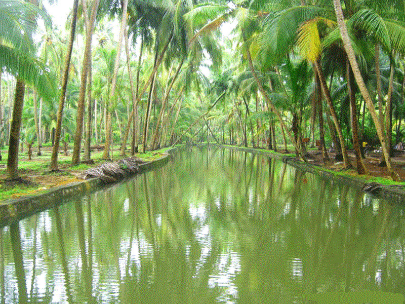 30 Kerala Images That Will Make You Want To Visit Kerala Kerala