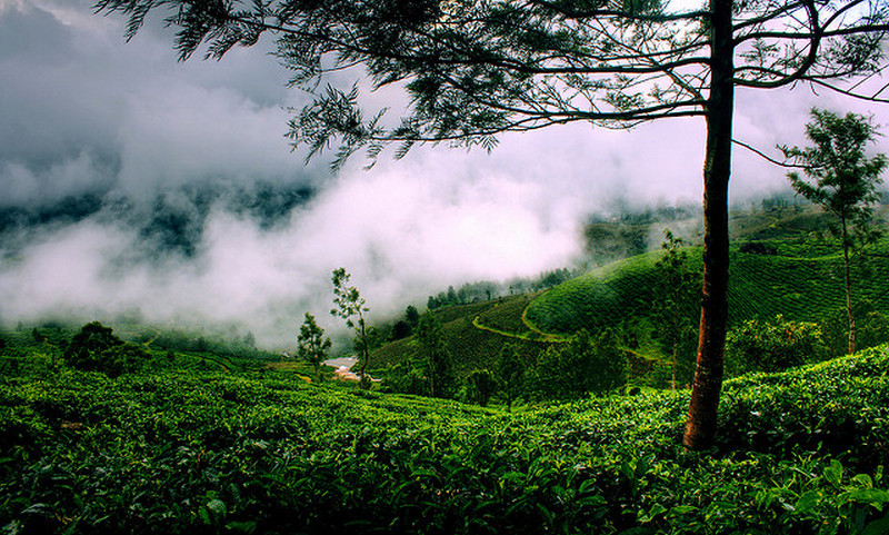 Image result for munnar  tourist cold