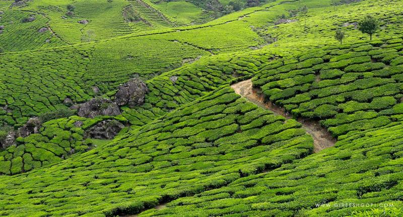 Beauty of Munnar Tea Gardens