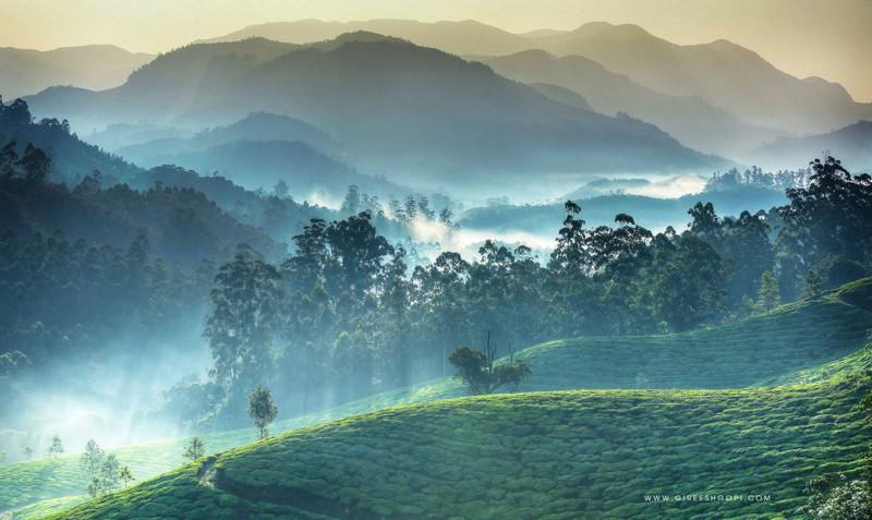 Sun rays over the Tea Gardens in Munnar