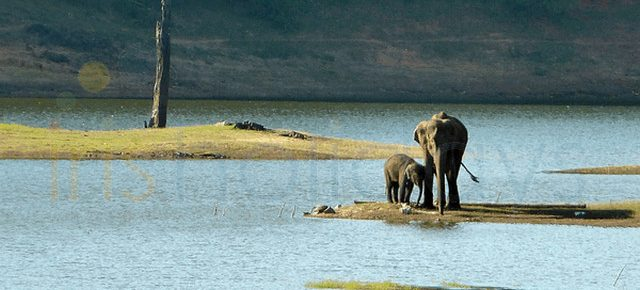 best-time-to-visit-thekkady