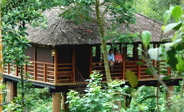 Best Treehouses in Kerala
