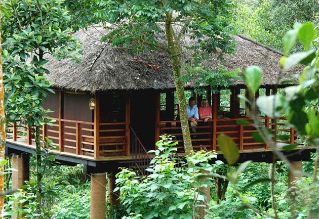 Best Treehouses in Kerala