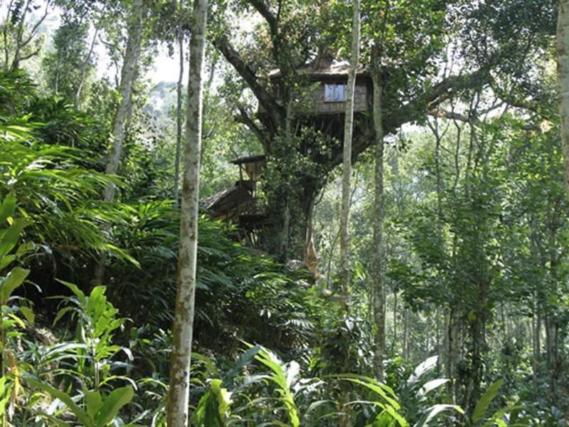 shola-periyar-treehouse
