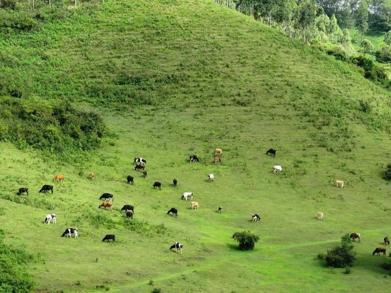 Mattupetty Indo Swiss Farm in Munnar