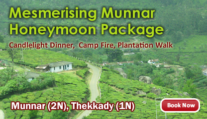 Misty Munnar Holiday Package