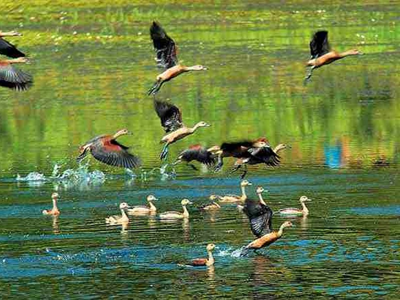 thattekad-bird-sanctuary-day-trip-from-kochi